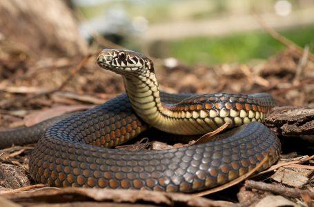 Doç.Dr.Nazım Kaşot Kıbrıs'ın yılanları ile ilgili açıklamada bulundu